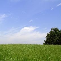 大草原の小さな僕